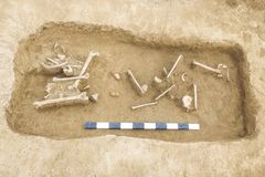 Archaeological excavations man and finds bones of a skeleton in a human burial, working tool, ruler, a detail of ancient resear. Ch, prehistory royalty free stock images