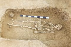 Archaeological excavations man and finds bones of a skeleton in a human burial, working tool, ruler, a detail of ancient resear. Ch, prehistory royalty free stock photography