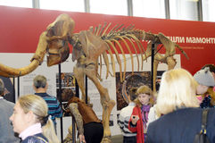 Archaeological exhibition. The skeleton of a mammoth. Moscow. Autumn Royalty Free Stock Photos