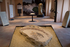 Archaeological Museum of Falerone, Italy Royalty Free Stock Images