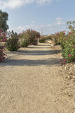 Archaeological site of Kato Paphos, Cyprus. Stock Images