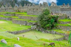 Archaeological site, Machu Picchu, Urubamba, Peru, 02/08/2019 royalty free stock images