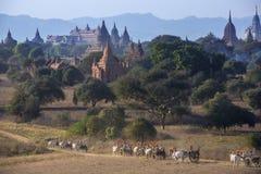 Archaeological Zone - Bagan - Myanmar (Burma). Temples of the Archaeological Zone in the ancient city of Bagan in Myanmar (Burma royalty free stock photography