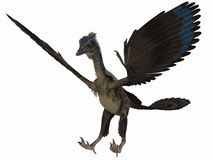 Archaeopteryx - 3D Dinosaur Royalty Free Stock Image