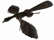 Archaeopteryx - 3D Dinosaur Stock Images