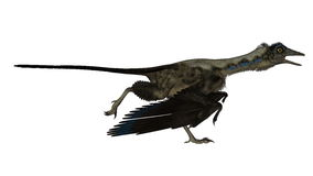 Archaeopteryx bird dinosaur running - 3D render Royalty Free Stock Photography