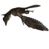 Archaeopteryx de dinosaur illustration stock