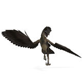 Archaeopteryx del dinosaurio Imágenes de archivo libres de regalías