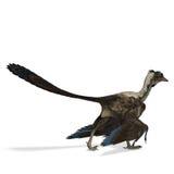 Archaeopteryx do dinossauro ilustração do vetor