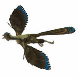 Archaeopteryx over White Royalty Free Stock Image