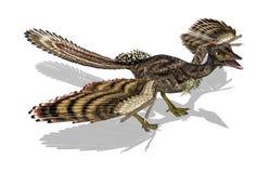 Archaeopteryx - pássaro pré-histórico ilustração royalty free