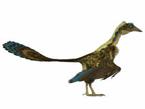 Archaeopteryx Side Profile Stock Photo