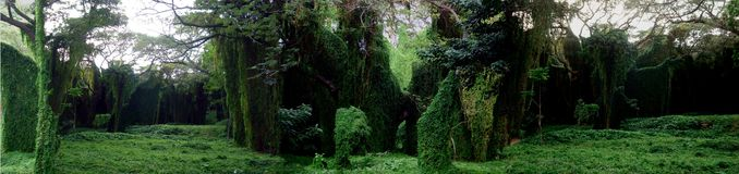 Archaic Forest Royalty Free Stock Photos