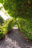 Arched alley in garden Royalty Free Stock Photography