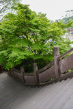 Arched bridge and verdant tree Stock Photography