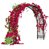 Arched pergola with roses Royalty Free Stock Image
