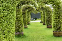 Arched Tree on green grass.Zoom in. 1 Royalty Free Stock Image