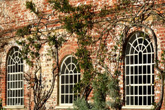Arched white windows Royalty Free Stock Image