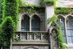 Arched windows and overgrown ivy Stock Images