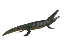 Archegosaurus Side Profile. Archegosaurus was an amphibian tetrapod that lived in Europe during the Permian Period vector illustration