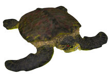 Archelonschildpad op Wit royalty-vrije illustratie