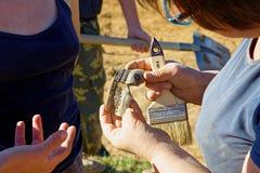 Archeolodzy dyskutują ich kawałki antyczny garnek robić piec glina Zdjęcia Stock