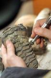 archeolog Zdjęcie Royalty Free