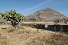 archeological aztec teotihuacan mexico lokal Royaltyfri Fotografi
