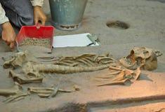 Archeologiczne ekskawacje. Obrazy Royalty Free
