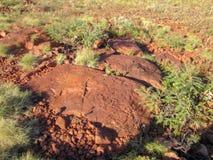 Archeologie - Rotsen in Pilbara in Westelijk die Australië aan de zaden van het verfgras wordt gebruikt royalty-vrije stock foto