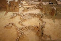 Archeologisch museum Royalty-vrije Stock Afbeelding