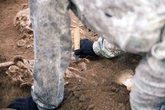 Archeologische Uitgraving De handen van archeoloog met hulpmiddelen die onderzoek naar menselijke beenderen leiden, een deel van  stock afbeeldingen