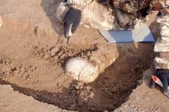 Archeologische uitgravingen De archeoloog in een graafproces Sluit omhoog handen met mes en borstel leidend onderzoek naar huma stock foto's