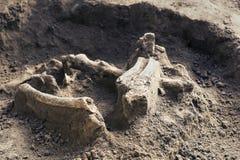 Archeologische uitgravingen en vondstenbeenderen van een skelet in een menselijke begrafenis, een detail van oud onderzoek, voorg stock afbeeldingen