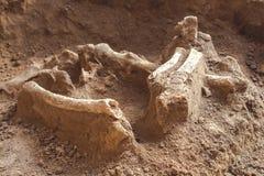 Archeologische uitgravingen en vondstenbeenderen van een skelet in een menselijke begrafenis, een detail van oud onderzoek, voorg stock afbeelding