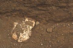 Archeologische uitgravingen van het been van de vondstschedel van het skelet in menselijke begrafenis, detail van oude studies, v stock afbeeldingen