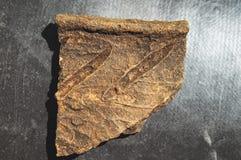 Archeologische vondsten van uitgravingen in het gebied van Saratov Fragmenten van de antiquiteit geschilderde bloemkroon van de p stock foto