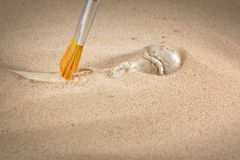 Archeology and forensics bones in sand. With brush Stock Photos