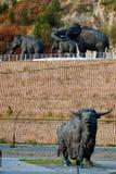 Archeopark in Khanty-Mansiysk Lizenzfreie Stockfotos