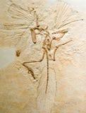 archeopteryks Obrazy Royalty Free