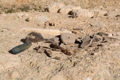 archeopteryks Fotografia Stock