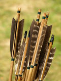 Archery arrows. Bunch of wooden archery arrows, arrow tails made with brown feathers stock photo