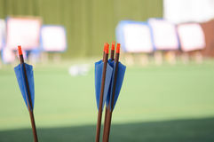 Archery arrows. Close up archery arrows, archery sport stock images