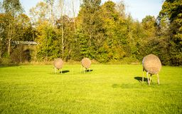 Archery targets in a field Royalty Free Stock Photo