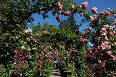 arches garden path rose Στοκ εικόνα με δικαίωμα ελεύθερης χρήσης