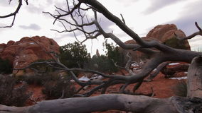 Arches National Park, Dead Tree stock video footage