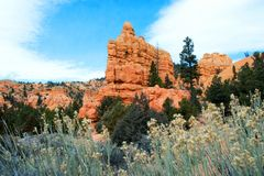 Arches National Park, Rocks Red Desert Mountain Landscape. Red Rocks and Pine Trees at Arches National Park, Moab, Utah, Landscape with Blue Sky royalty free stock image