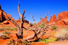 Arches National Park view Royalty Free Stock Images