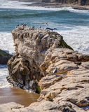 Arches at Natural Bridges State Beach stock photography