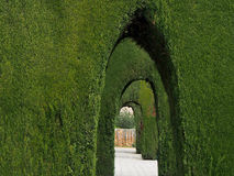 Arches of Ornamental Shrubs Walkway Stock Images